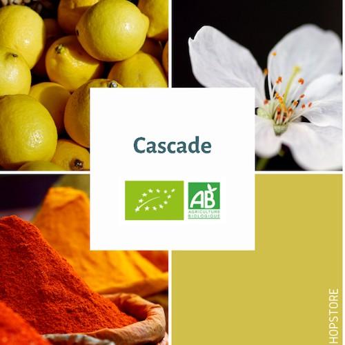 Houblon bio Cascade