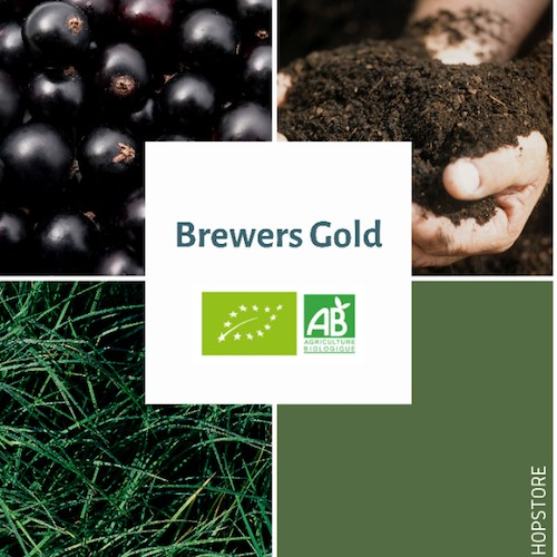 Houblon bio Brewers Gold